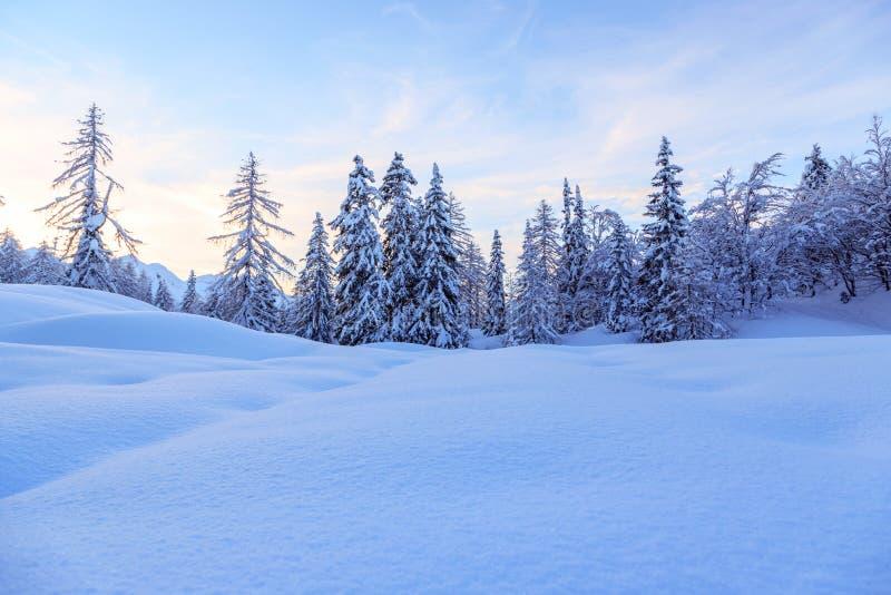 Download Zima las w Alps zdjęcie stock. Obraz złożonej z mróz - 53790008
