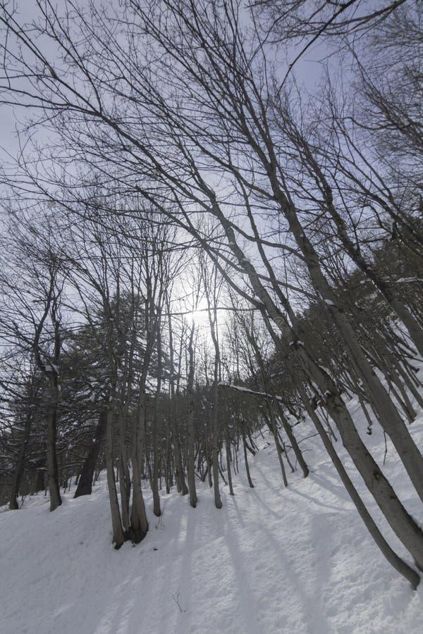 Zima las w Switserland obrazy stock