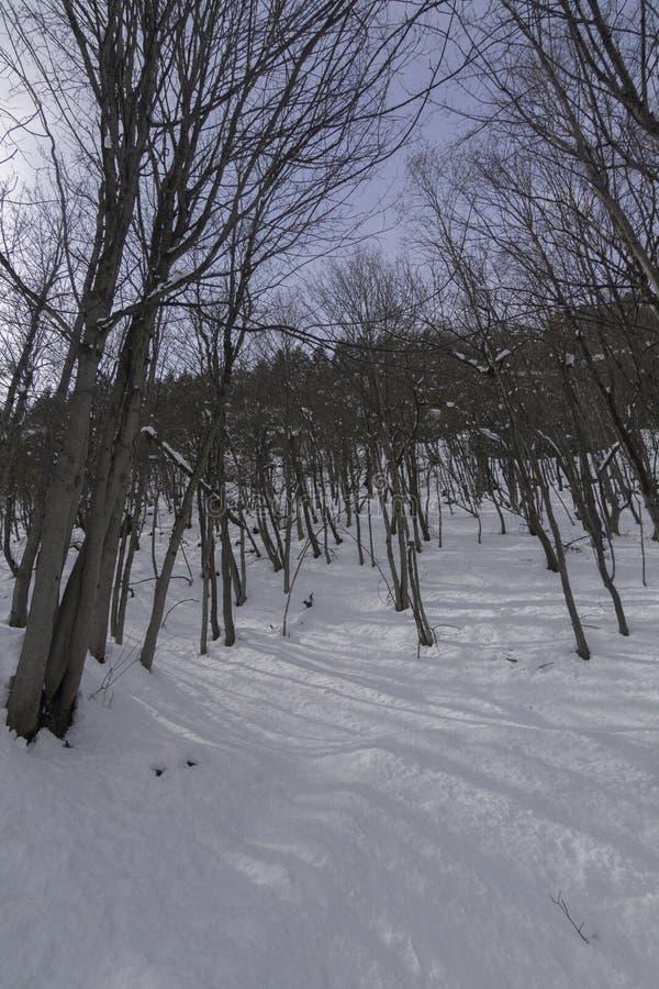 Zima las w Switserland obraz royalty free