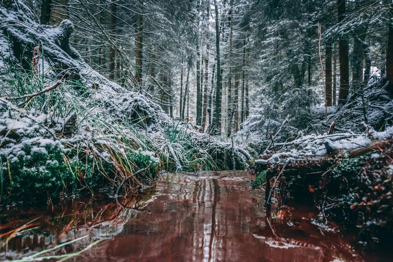 Zima las z drzewami zakrywającymi z śniegiem zdjęcie royalty free