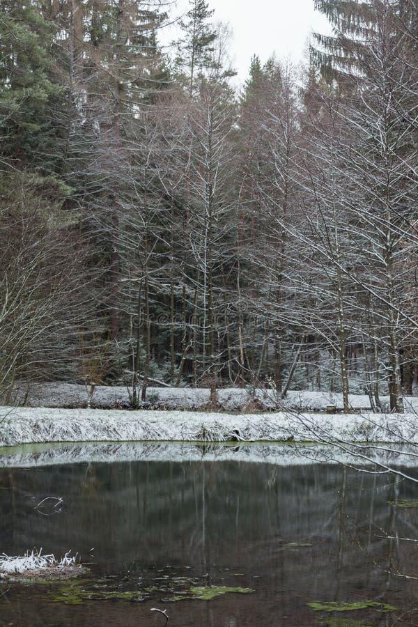 Zima las z drzewami zakrywającymi z śniegiem obraz royalty free