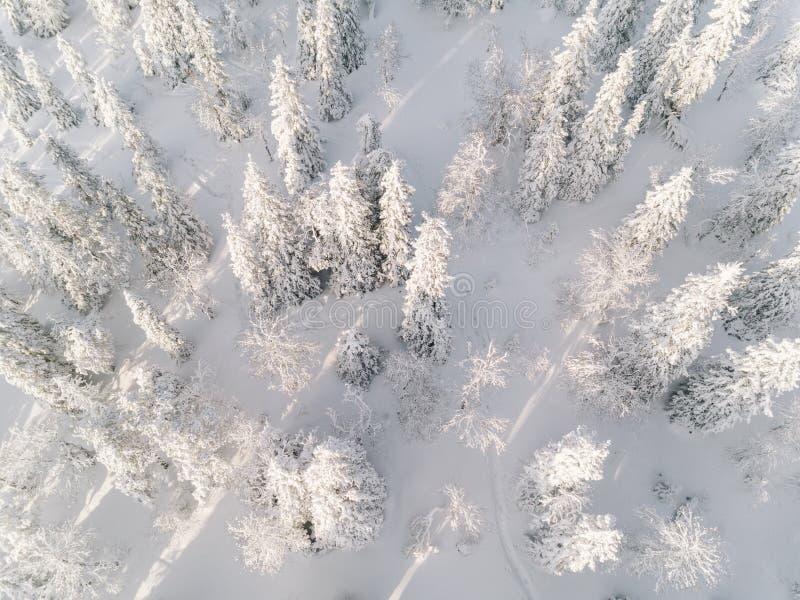 Zima las z mroźnymi drzewami, widok z lotu ptaka Finlandia zdjęcia royalty free