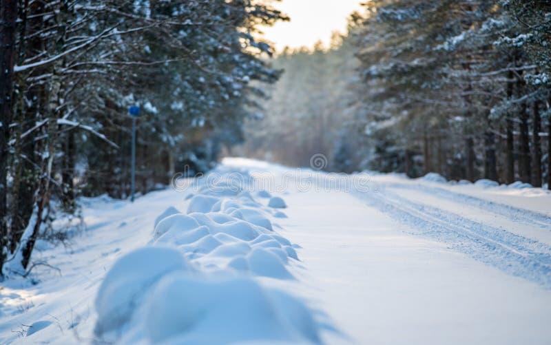 Zima las z snowa obraz royalty free