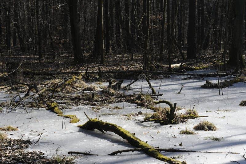 Zima las z zamarzniętym jeziorem i nagimi drzewami obraz stock