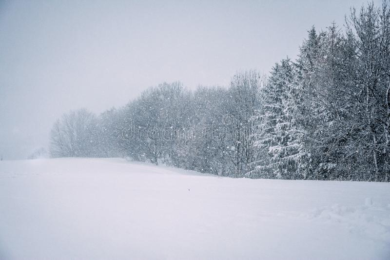 Zima las z zimy miecielicą obrazy stock