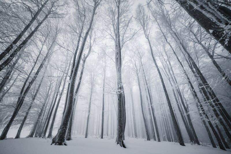 Zima las, zimy natura obrazy royalty free