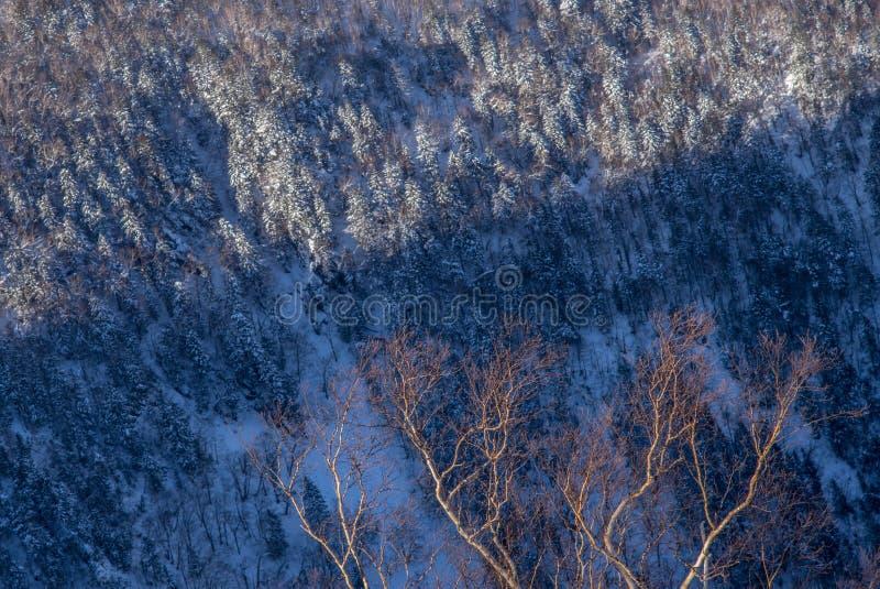 Zima lasu krajobrazu widok od góry Kurodake obrazy royalty free