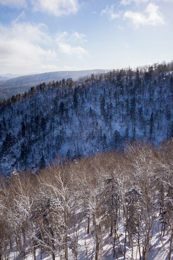 Zima lasu krajobrazu widok od góry Kurodake obraz royalty free