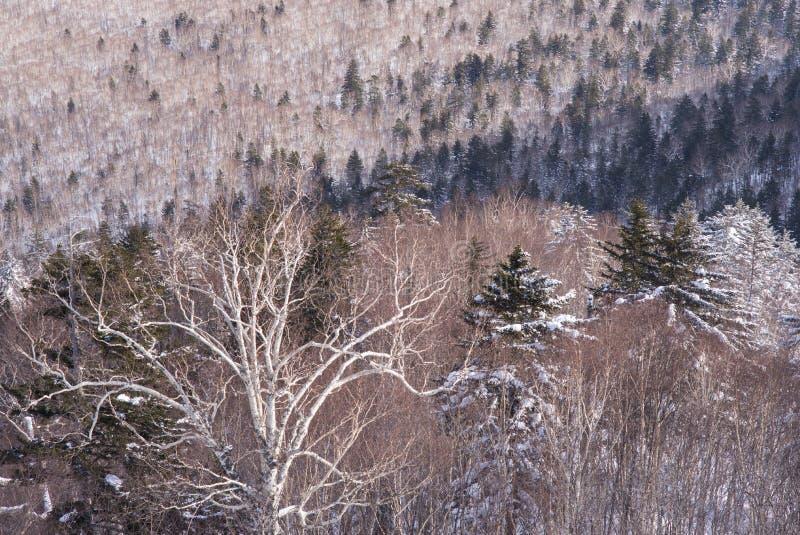 Zima lasu krajobrazu widok od góry Kurodake zdjęcia stock