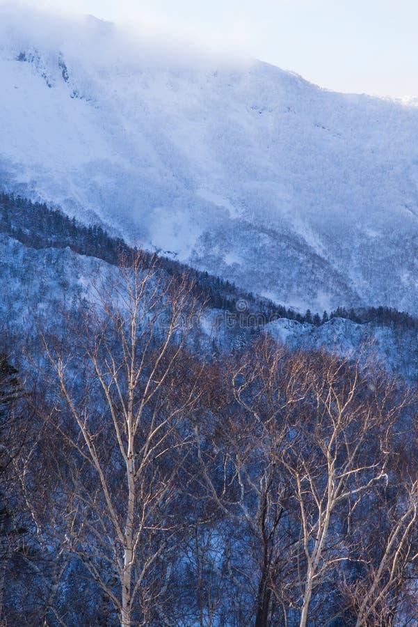 Zima lasu krajobrazu widok od góry Kurodake zdjęcia royalty free