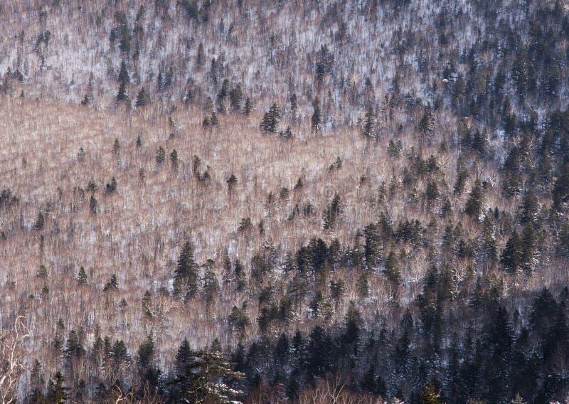 Zima lasu krajobrazu widok od góry Kurodake fotografia royalty free