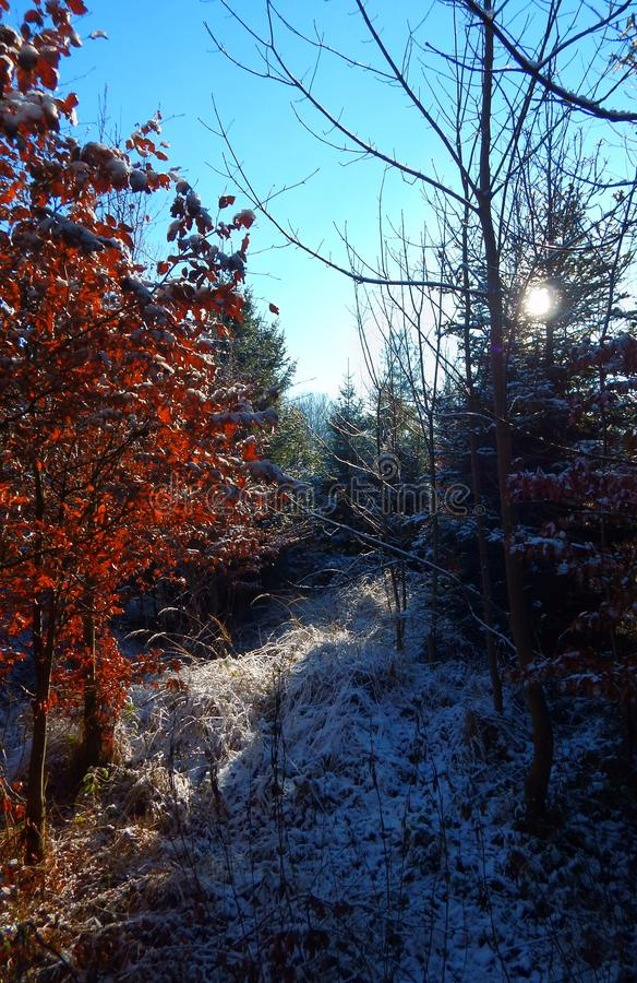 Zima lasu wspominki obrazy stock