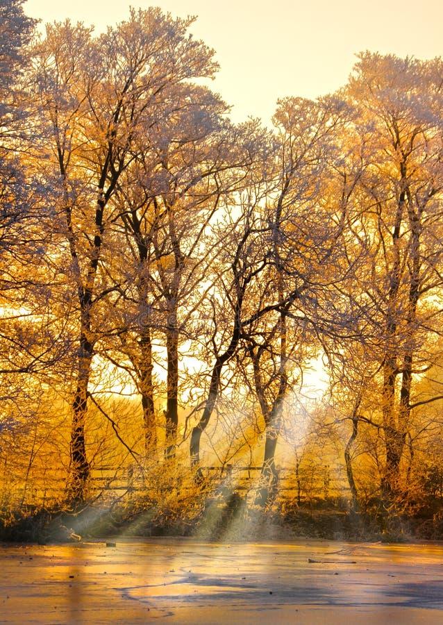 Zima lasu zmierzch zdjęcia royalty free