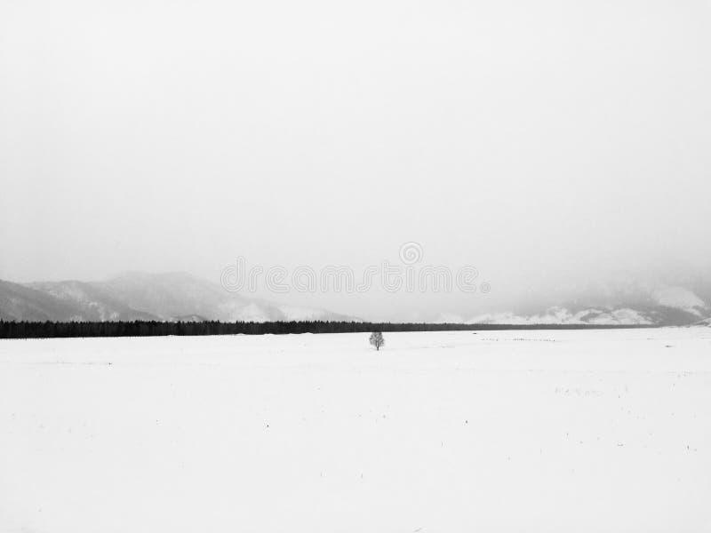 Zima medytacyjny krajobraz obraz royalty free