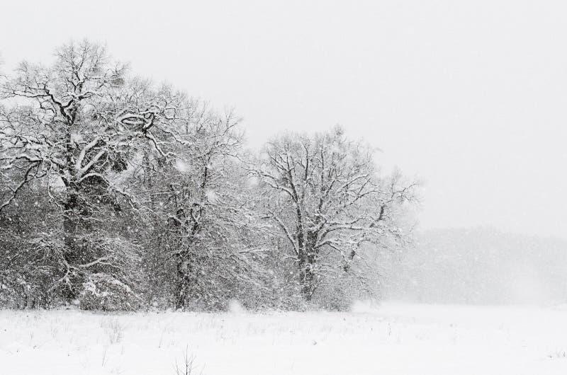 Zima minimalisty krajobraz zdjęcia stock