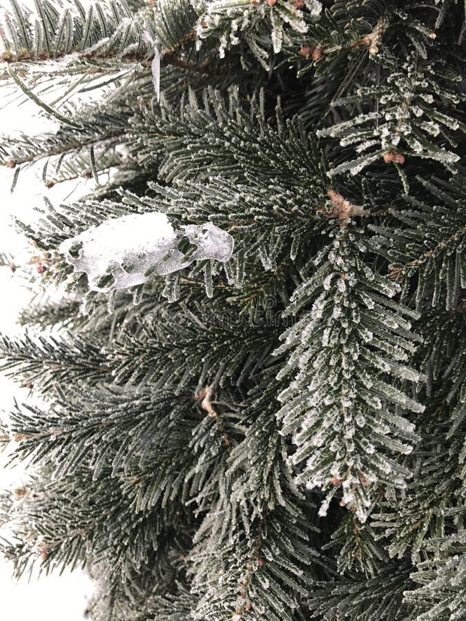Zima mr?z zdjęcie stock