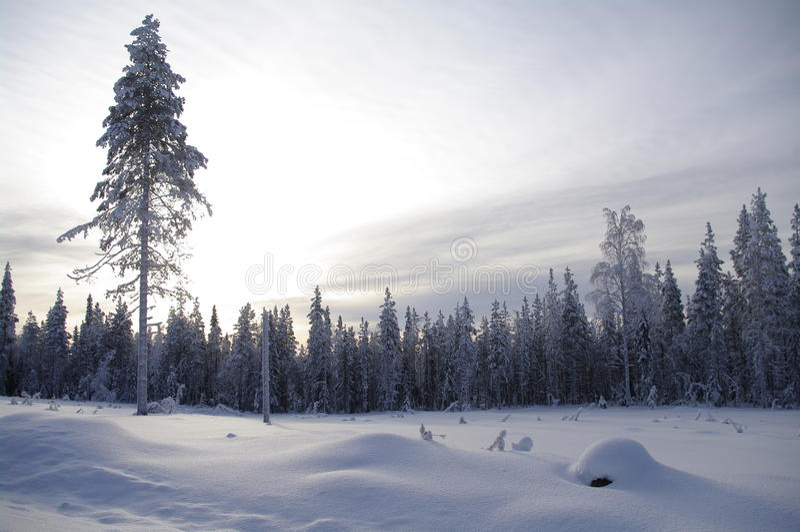 zima mroczna kraina cudów obrazy stock