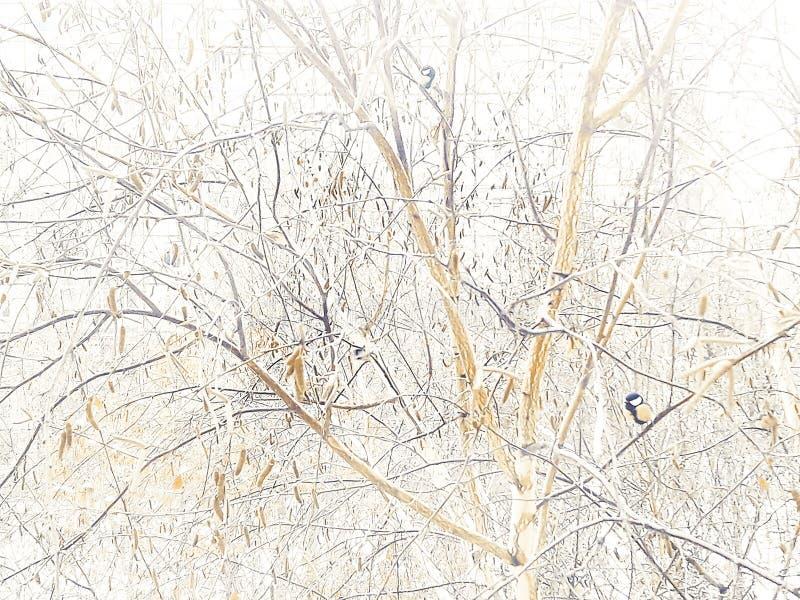 """Zima obrazek Titmouse na brzozie Zimy â krajobrazowy """"– 3 zdjęcie royalty free"""
