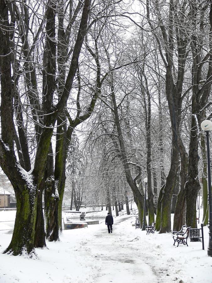 zima park zdjęcie stock