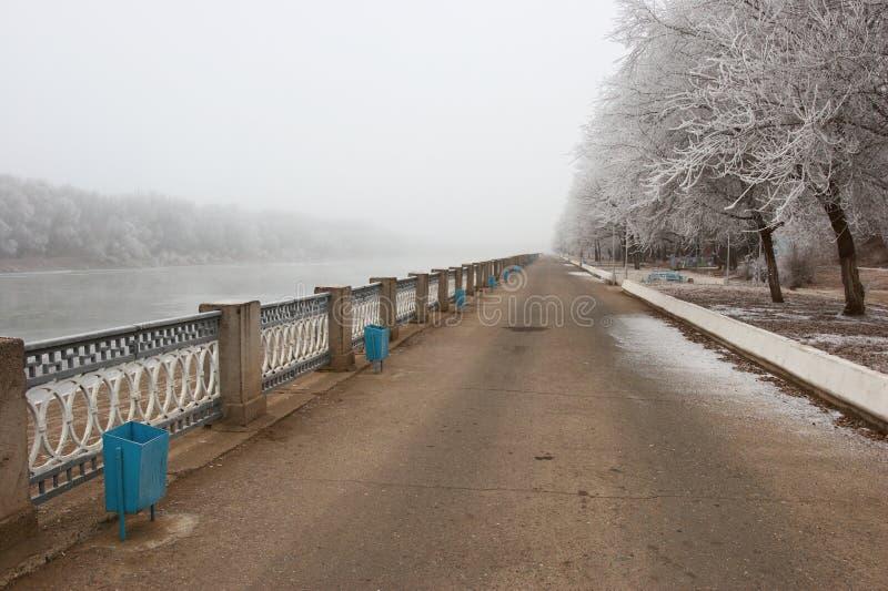zima park zdjęcie royalty free