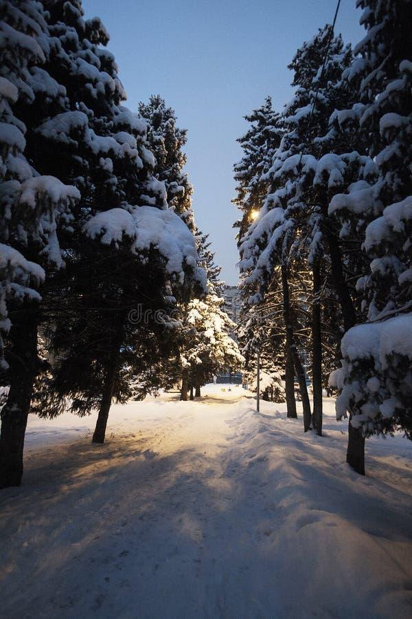 Zima parkowy śnieg na drzewo choinek krzaków śnieżystej drodze obraz stock