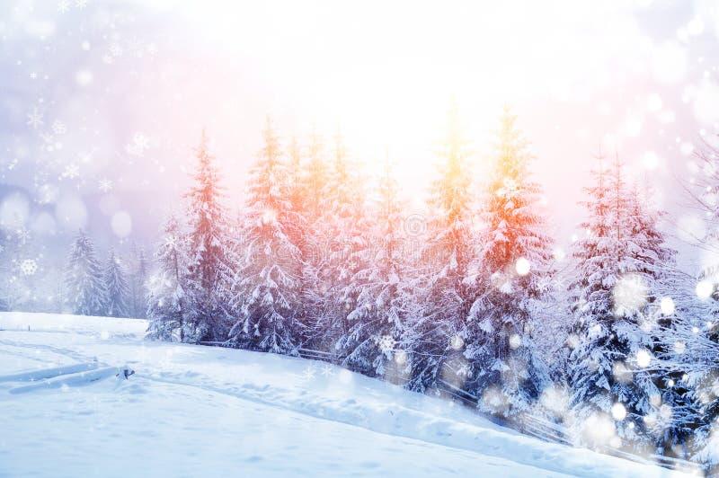 Zima piękny krajobraz fotografia royalty free