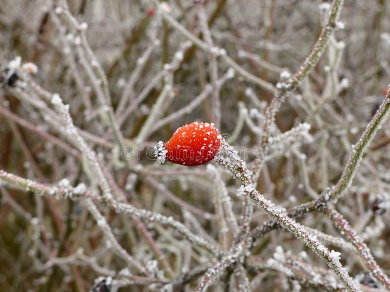 Zima przychodzi obrazy stock