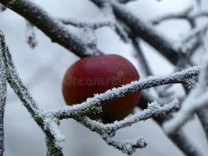 Zima przychodzi fotografia royalty free
