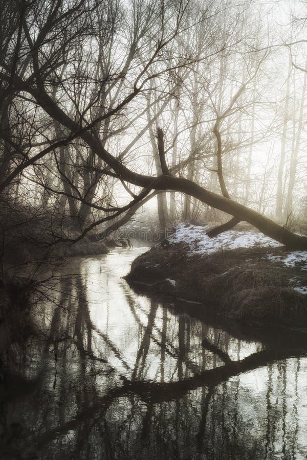 Zima ranek w lesie zdjęcia royalty free