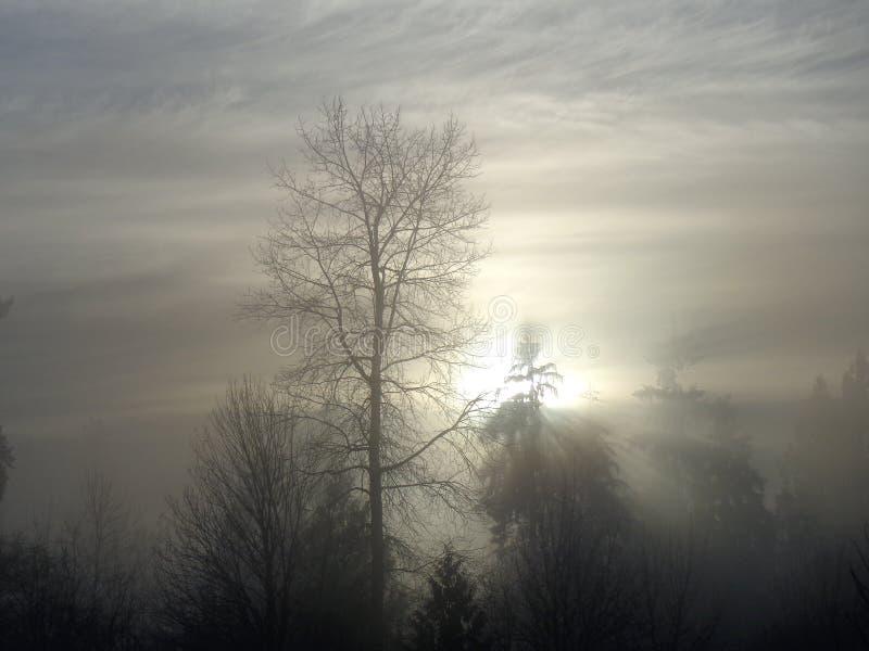 Zima ranku mgiełka zdjęcie stock