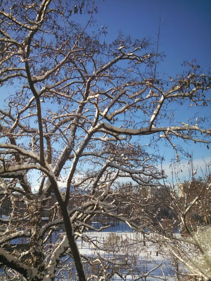 Zima słoneczny dzień fotografia royalty free