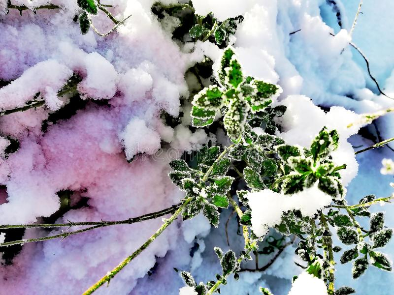 Zima skład, kolorowy śnieg, zieleń opuszcza w lodzie obrazy stock