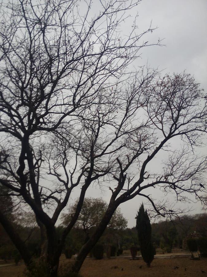 Zima skutki na drzewach zdjęcia stock