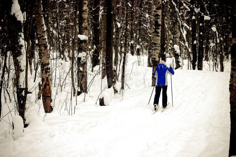 Zima sport, ludzie iść narciarstwa, zima las, narciarka jedzie nartę w drewnach zdjęcie royalty free