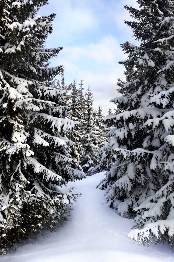 zima szwedzka zdjęcie stock