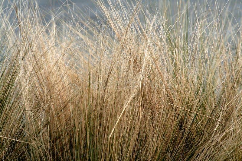zima trawy zdjęcie royalty free