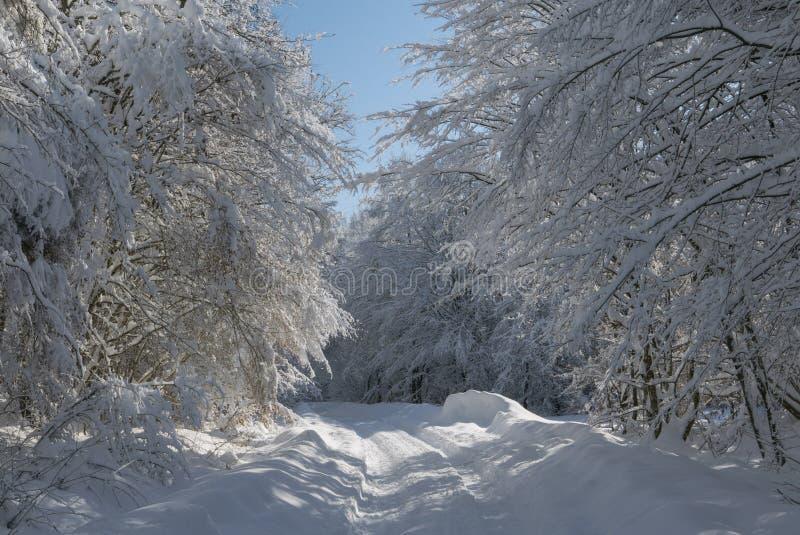 Zima tunel zdjęcie royalty free