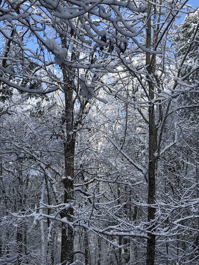 Zima w zdjęcia royalty free