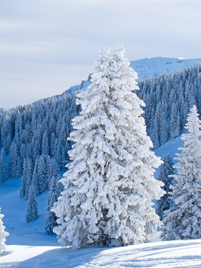 Zima w alps obraz stock