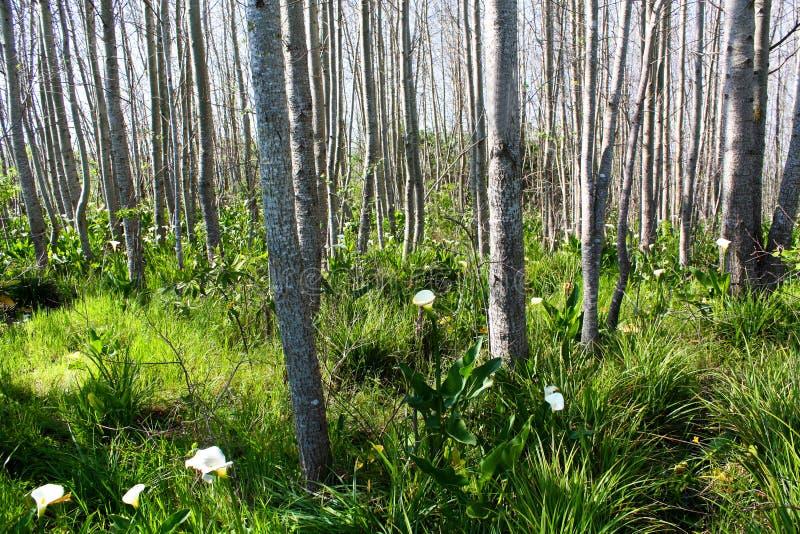 Zima w drewnach zdjęcie royalty free