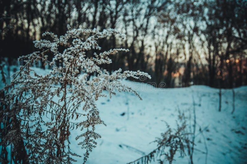 Zima w drewnie zdjęcie stock