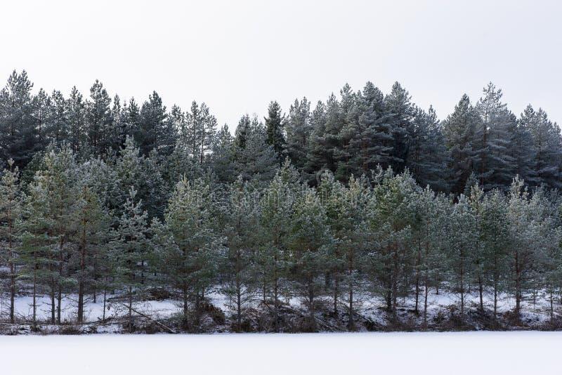 Zima w jeziorze Lodowaty zimny lasowy Mroźny drewno i ziemia Mróz temperatury w naturze Śnieżny naturalny środowisko obraz stock