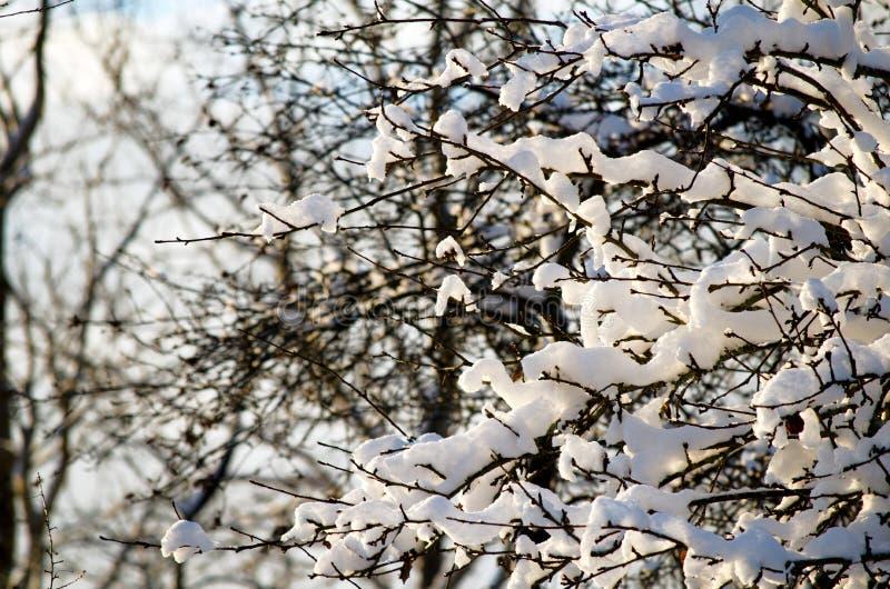 Zima w lesie obrazy stock