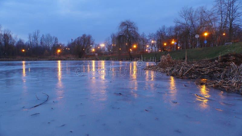 Zima w parku przed świtem, obrazy stock