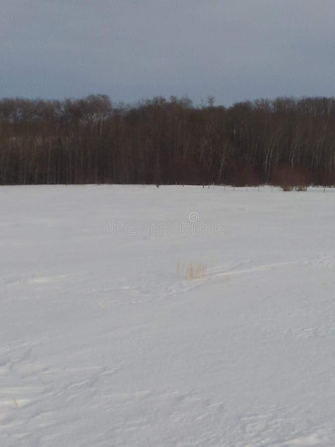Zima w polu zdjęcie royalty free