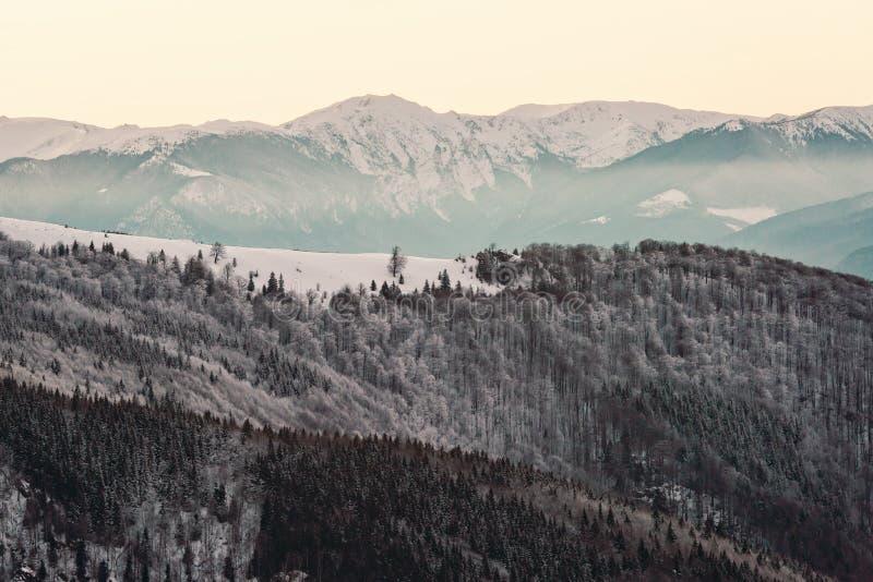 Zima w Rumuńskich Karpackich górach zdjęcia royalty free