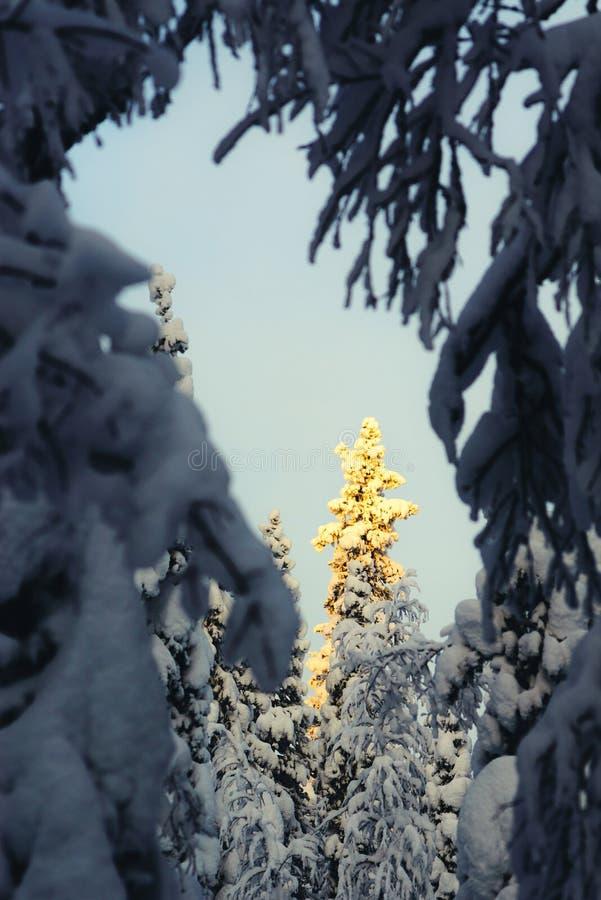 Zima w tajga lesie zdjęcie royalty free