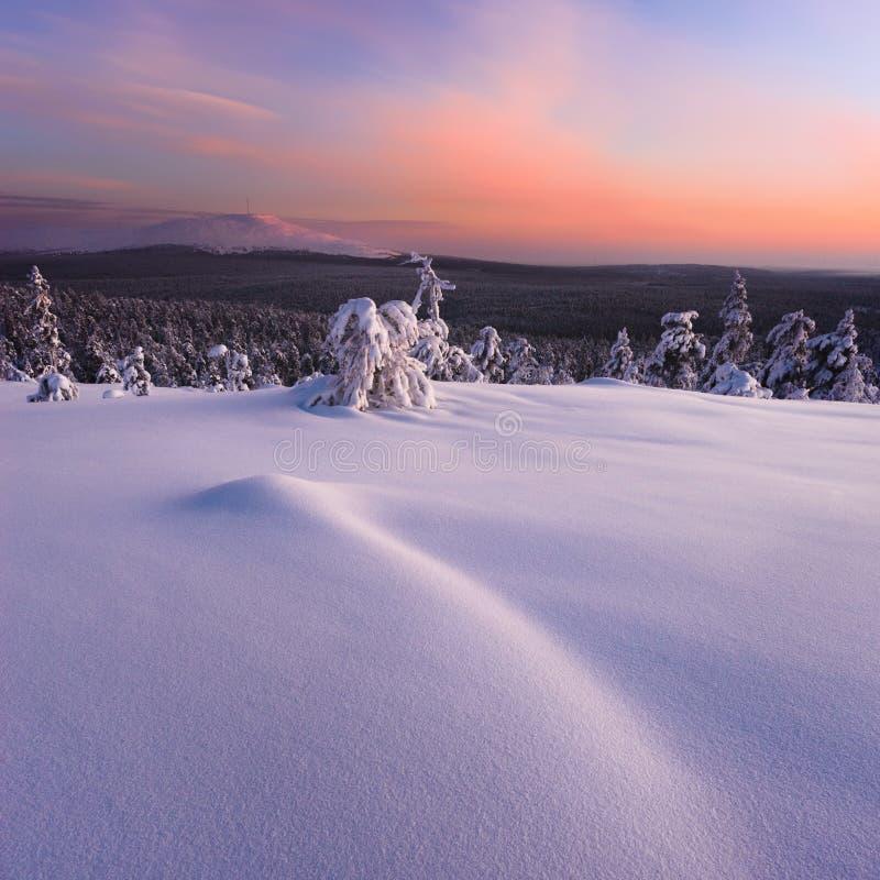 Zima w tajga lesie zdjęcia stock