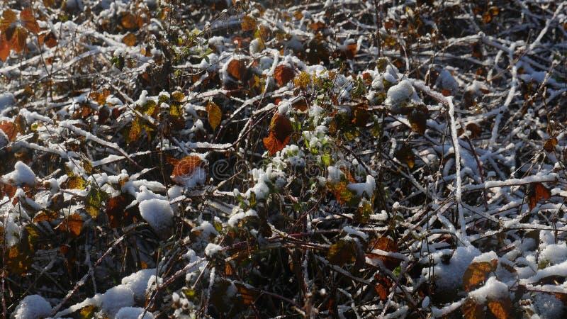 Zima w zalesionym terenie górskim czech granica obraz stock