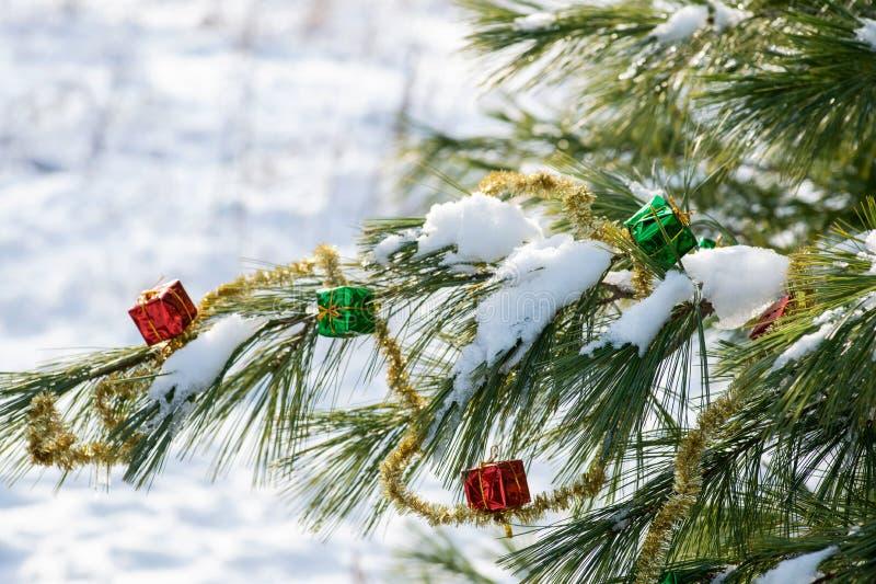 Zima wakacje dekoracji pojęcie: Bożenarodzeniowy prezenta wystrój, świecidełko girlanda i zamarznięty śnieg zakrywająca sosna, ka obraz stock